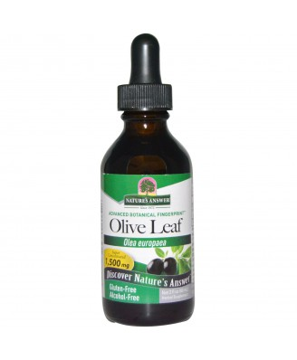 Olive Leaf, Alcohol-Free, 1500 mg (60 ml) - Nature's Answer